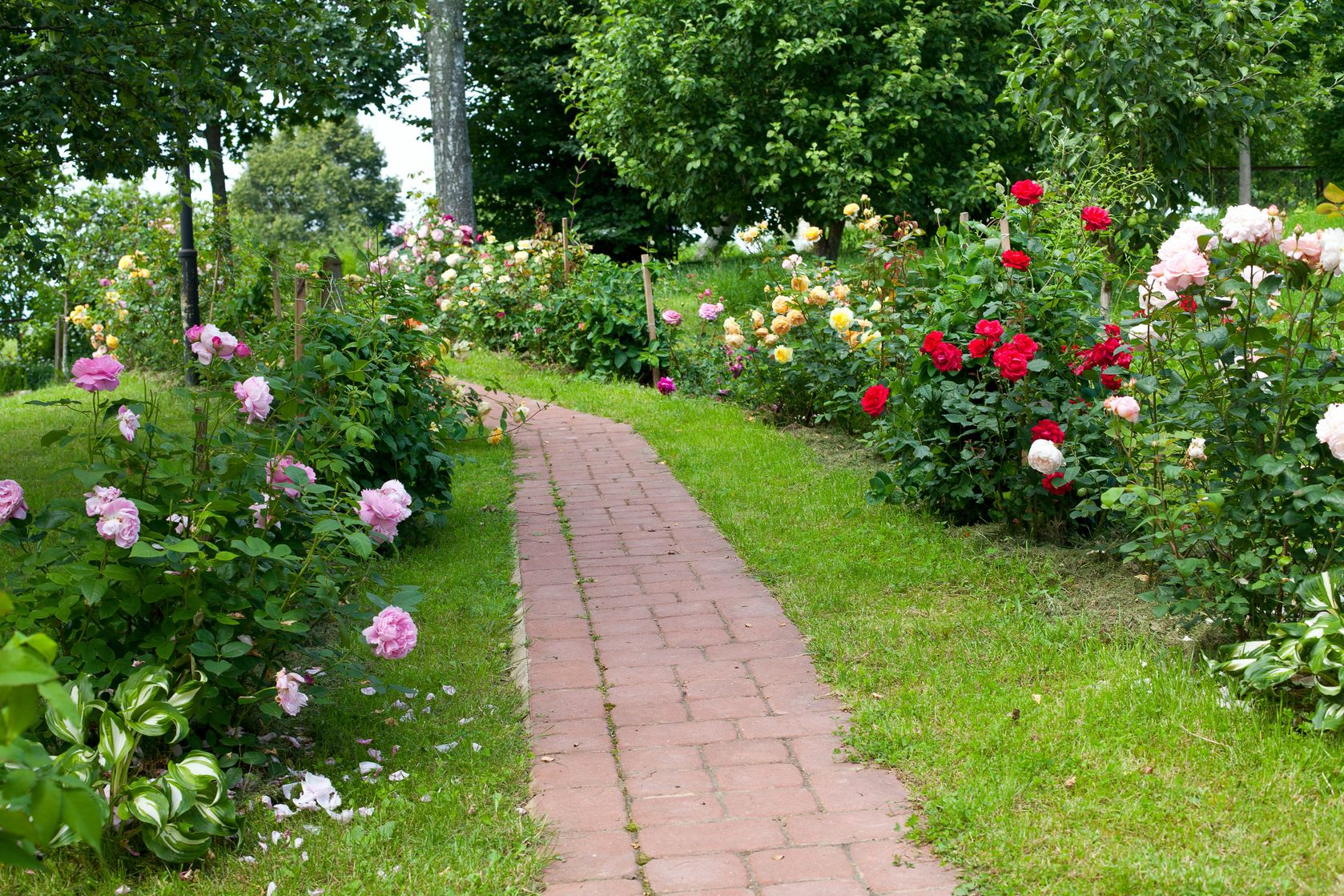 Maintaining a Healthy Summer Lawn