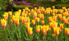Time To Prepare For The Spring with Landscaping and Hardscaping