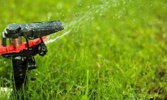 Landscaping Tips for the Summer: How to Keep Your Yard Looking Lush