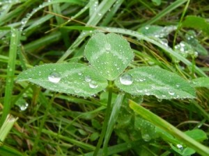 When to Plant Grass Seed | Mansell Landscape