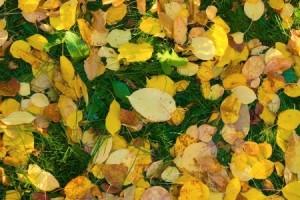 fall-landscape-maintenance