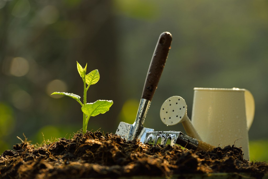 Planting in the Fall | Mansell Landscape Management