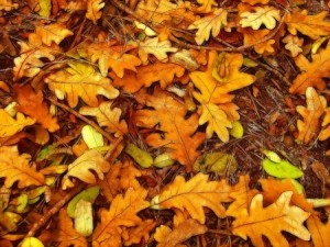 Leaf Clean Up For Your Yard | Mansell Landscape