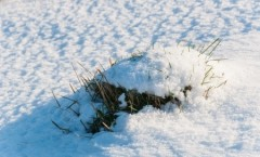 How to Protect your Lawn from the Winter Cold
