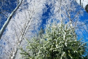 protect your lawn from the winter cold