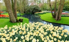 Spring Forward with these Landscape Tips