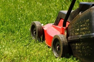 mowing the lawn | summer lawn and landscaping