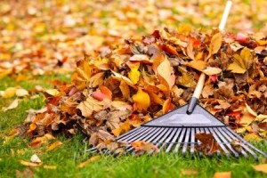 raking leaves | Mansell Landscape Management