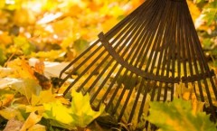 Easy Guide To Fall Leaf Removal