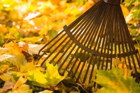 Leaf Clean Up | Mansell Landscape Management