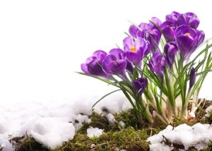Winter Landscaping Tips for Spring