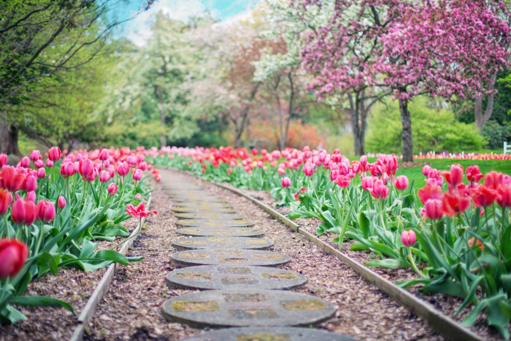 Spring Lawn Care   Tulips   Mansell Landscape