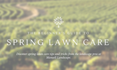 The Beginner's Guide to Spring Lawn Care
