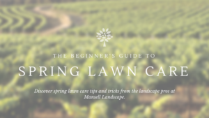 Spring Lawn Care Tips | Mansell Landscape
