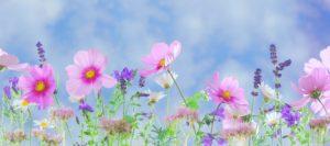 Spring Flower | Mansell Landscape