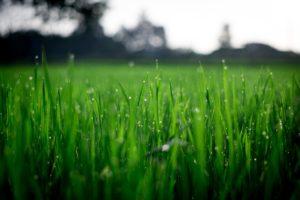 Summer Lawn Care Green Grass | Mansell Landscape Management