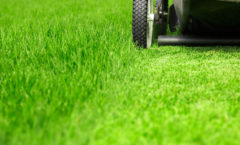 Late Summer Lawn Care Dos and Don'ts