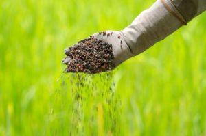 Fertilizer | Mansell Landscape