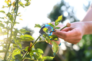Pruning Flowers in Spring | Mansell Landscape Management