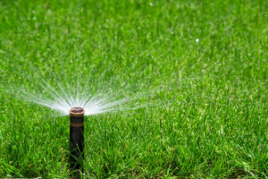 Sprinkler Watering Grass | Mansell Landscape Management