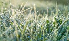 Caring For Your Lawn In Winter