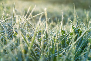 Caring For Your Lawn In Winter | Mansell Landscape Management