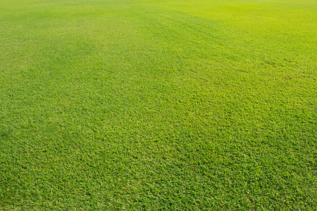 Keep A Clean Lawn In Winter | Mansell Landscape Management