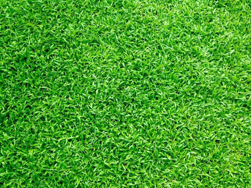 Trimmed Grass Yard | Mansell Landscape Management