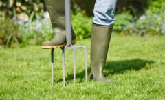Should You Aerate Your Yard?