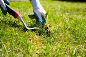 Weed Control | Mansell Lanscape