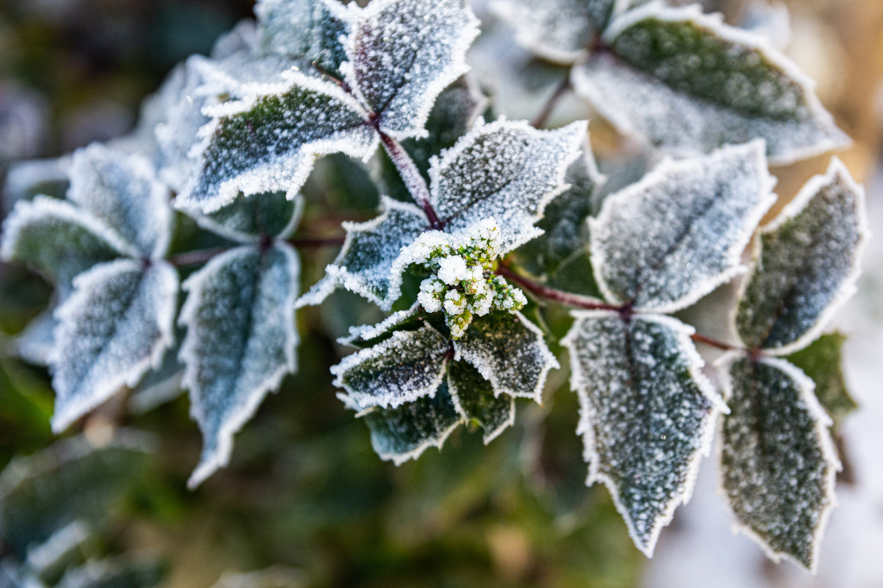 Protect Your Plants From Frost | Mansell Landscape