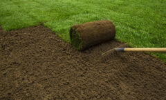 Pros & Cons of Seed and Sod For Your Lawn