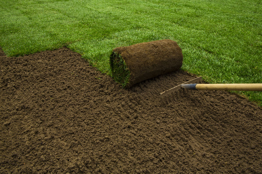 Benefits of Sod For Your Lawn | Mansell Landscape