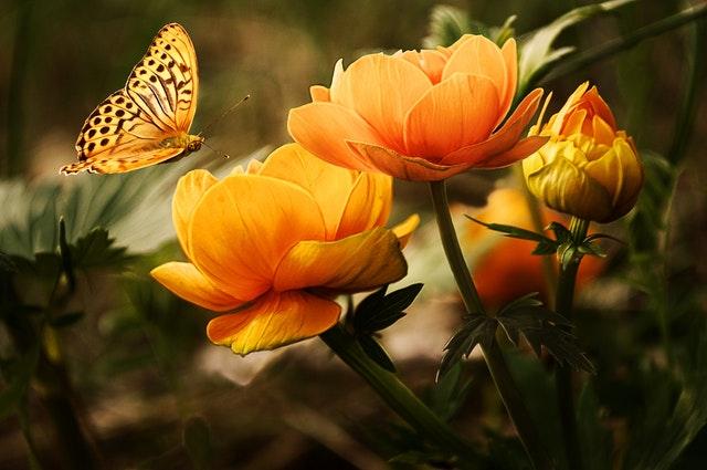 Summer Flowers For Your Garden | Mansell Landscape