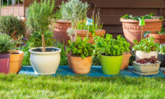 Plants That Repel Bugs On Your Property