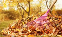 Fall Lawn Care Tips for Your Grass