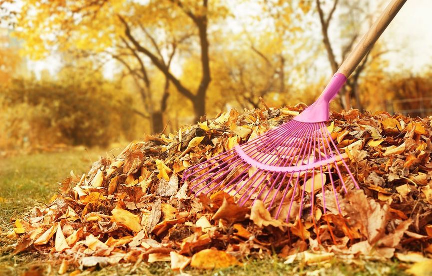 fall lawn care tips | Mansell Landscape