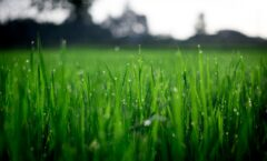 Spring Lawn Maintenance For The Growing Season