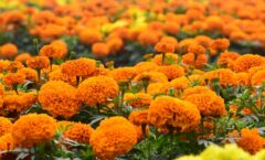 Plants That Repel Bugs For Your Property