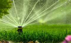 How Often Should You Water Your Lawn In Summer