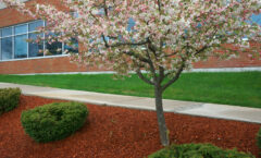 Why Your Business Needs Commercial Landscaping