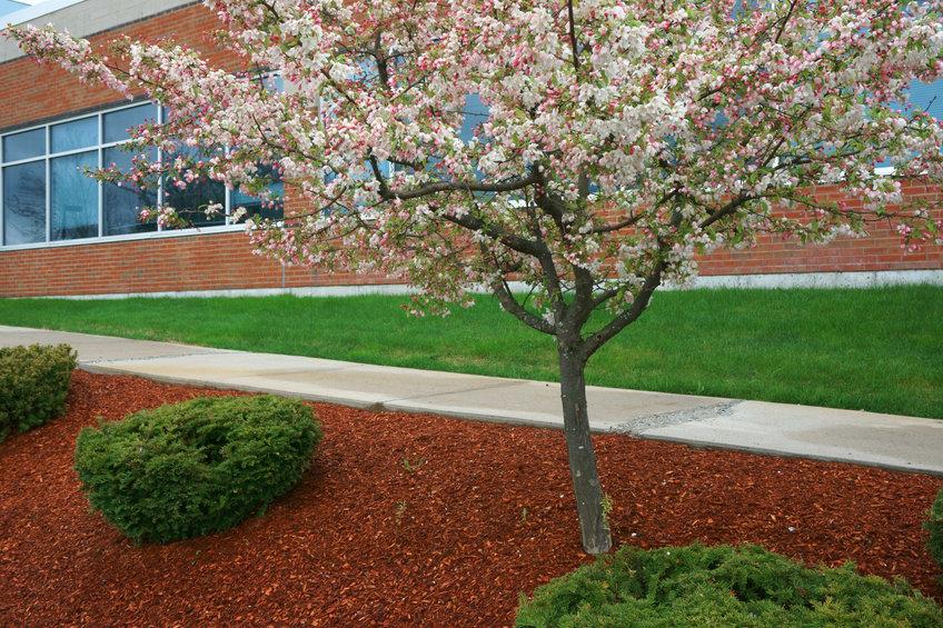 Commercial Landscaping | Mansell Landscape