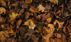 Fall Landscape Tips & Tricks For Your Property