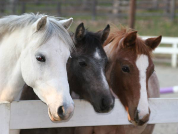 Estate and Farm Management Image: horses.jpg